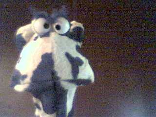 Mad Cow!